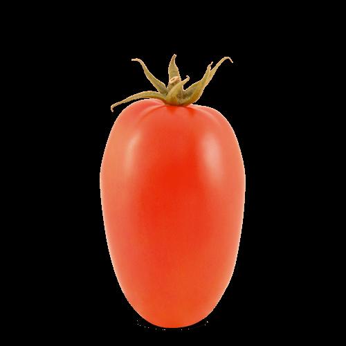 Tomate Indeterminado Italiano Júpiter