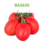 tomate-industrial-processo-ba5630