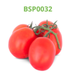 tomate-industrial-processo-bsp0032