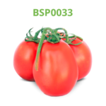 tomate-industrial-processo-bsp0033