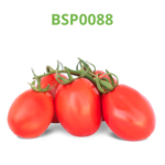tomate-industrial-processo-bsp0088