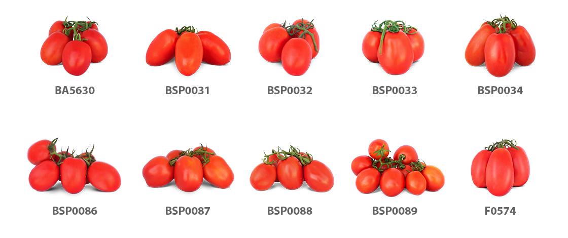 linha de tomates industriais blueseeds