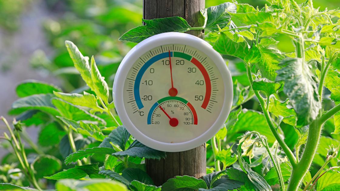 Vantagens do plantio no inverno para hortaliças